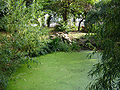 Clissold park new river 1.jpg