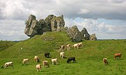 Clonmacnoise castle and cattle