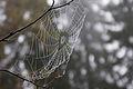 Cobweb (6200880673).jpg