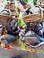 Coconut Crabs - panoramio.jpg