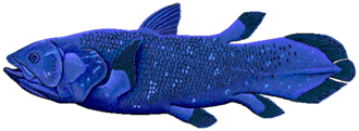 Ichthyology - Coelacanth
