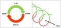 Coiled Life Cycle.png