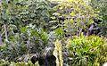Colección Palmetum de Santa Cruz de Tenerife 11.JPG