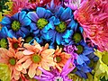Colorful Crazy Daisies (3) (2530055151).jpg