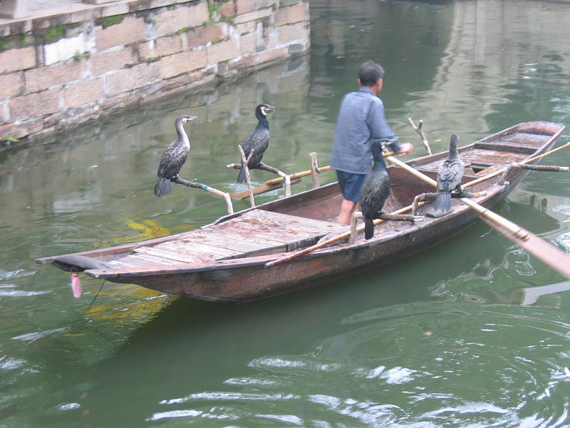 Файл:Cormorant fishing -Suzhou -China-6July2005.jpg