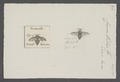 Crocisa - Print - Iconographia Zoologica - Special Collections University of Amsterdam - UBAINV0274 045 08 0032.tif