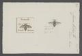 Crocisa - Print - Iconographia Zoologica - Special Collections University of Amsterdam - UBAINV0274 045 08 0032.tif