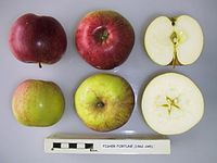 Cross section of Fisher Fortune, National Fruit Collection (acc. 1962-045).jpg