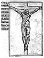 Crucified male with musculature delineated - Berengarius 1521 Wellcome L0018613.jpg