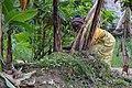 Cultivatrice camerounaise.jpg