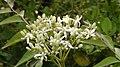 Curry flowers.jpg