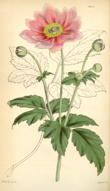Curtis's Botanical Magazine, Plate 4341 (Volume 73, 1847).png