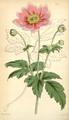 Curtis's Botanical Magazine, Plate 4341 (Volume 73, 1847).png