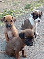 Cutie puppies.jpg