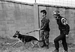 DF-SN-83-02859 Security policemen A1C Steven Thompson and Korean Air Force A1C AN Jae Hun patrol the base with a sentry dog.jpeg