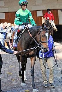 Sistercharlie Irish-bred Thoroughbred racehorse