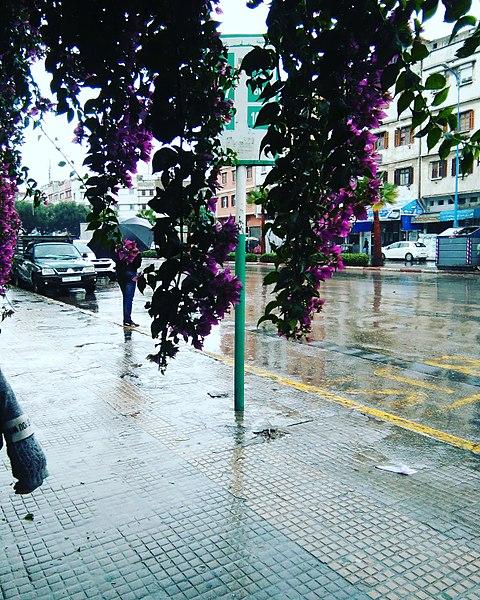 File:Dans les bras d'un arbre sous la pluie.jpg