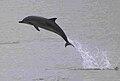 Delfines-gijon-2.jpg