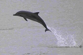Delfines-gijon-2