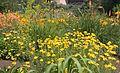 Denver Botanic Gardens (181024142).jpg