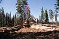 Deschutes National Forest, timber salvage logging-2 (36951213121).jpg