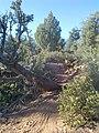 Devil's Bridge Trail, Sedona, Arizona - panoramio (21).jpg