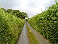 Devon small road - geograph.org.uk - 24237.jpg