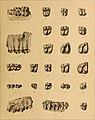 Die Säugetiere des schweizerischen Eocaens - critischer Catalog der Materialien (1903) (20325751523).jpg