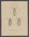Diversen - Print - Iconographia Zoologica - Special Collections University of Amsterdam - UBAINV0274 024 04 0078.tif