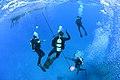 Diving operations, RIMPAC 2014 140709-N-TM257-051.jpg
