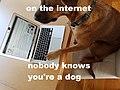 Dog meme.jpg