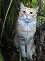 Domestic Cat Demonstrating Dilated Slit Pupils.jpg
