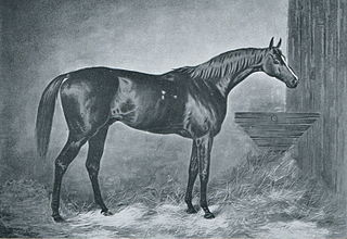Doncaster (horse) British-bred Thoroughbred racehorse