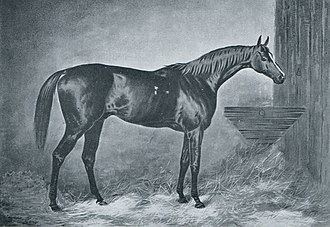 Doncaster (horse) - Image: Doncaster (GB)