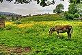 Donkey Pasture, Reeth - geograph.org.uk - 839588.jpg