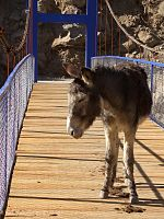 Donkey on the bridge.jpg