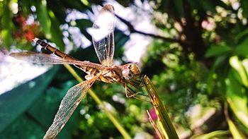 Drgon Fly.jpg