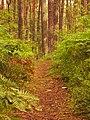Druvciems - panoramio (40).jpg