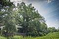 Dub letni v Borku I-2018-06-Borek nad Labem.jpg