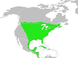 Gray catbird - Image: Dumetella carolinensis map