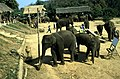 Dunst Myanmar 2005 02.jpg