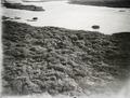 ETH-BIB-Elefantenherde an Fluss-Kilimanjaroflug 1929-30-LBS MH02-07-0215.tif