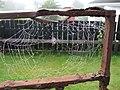 Early morning cobwebs, Omagh - geograph.org.uk - 1483927.jpg