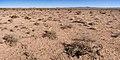 East of Cookes Range - Flickr - aspidoscelis (2).jpg