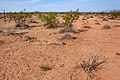 East of the Black Range - Flickr - aspidoscelis.jpg