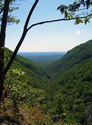 A narrow divide between two steep forest-covered mountainsides viewed from high above, with a tree, branches and leaves framing the view on the top and left. In the rear the land becomes flat, tinted blue at the horizon