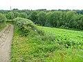 Eastern edge of Millway Grove - geograph.org.uk - 1427668.jpg