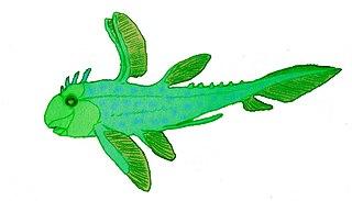 <i>Echinochimaera</i> genus of fishes