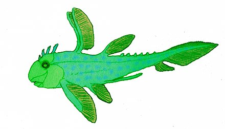 Echinochimaera