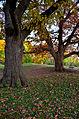 Effigy Mounds-Vilas Group, Madison, WI 10-31-2011503.jpg